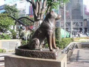 Hachiko, a dog story - Povestea emotionanta a unui caine devotat.